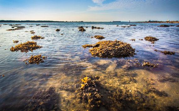 Pulau Semakau Exploration